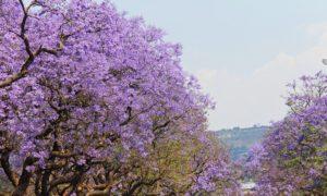プレトリア 南アフリカ