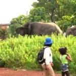 モレ国立公園 ガーナ