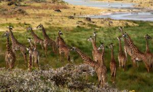 自然がいっぱい、タンザニア