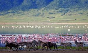 ンゴロンゴロ自然保護区 タンザニア